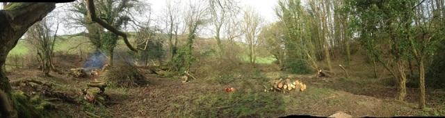 After - wood regeneration