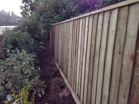 New fencing and shrubs